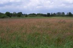 graslandschaft-am-postsee