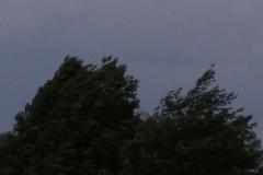seeadler-am-postfelder-see